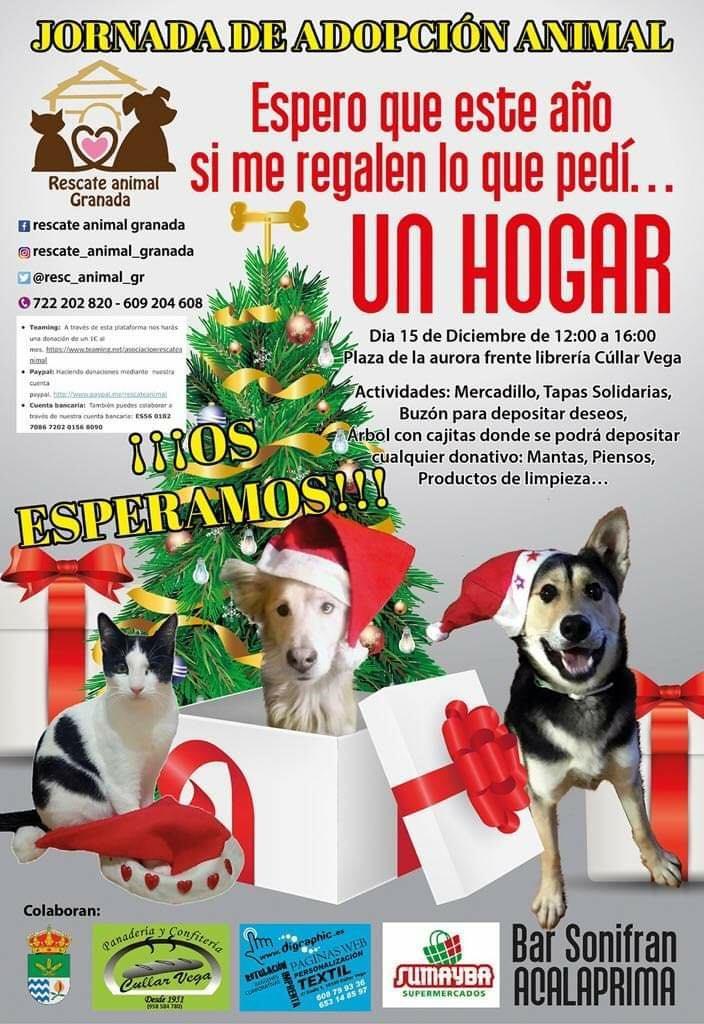 Cúllar Vega acoge una jornada de adopción animal para concienciar a sus vecinos de que una mascota no es un juguete