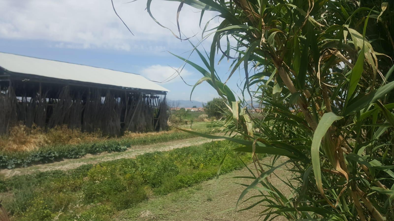 Cúllar Vega convoca subvenciones para el mantenimiento de secaderos de tabaco