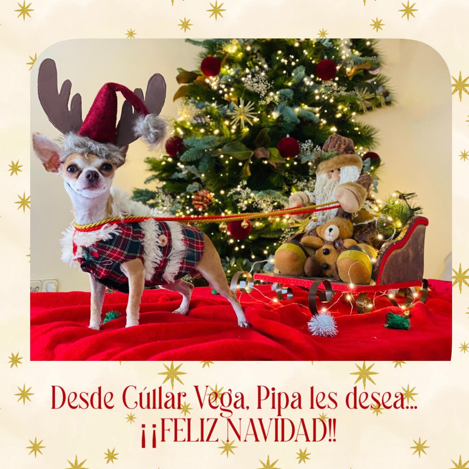 Ganadores del I Concurso de Christmas de Mascotas