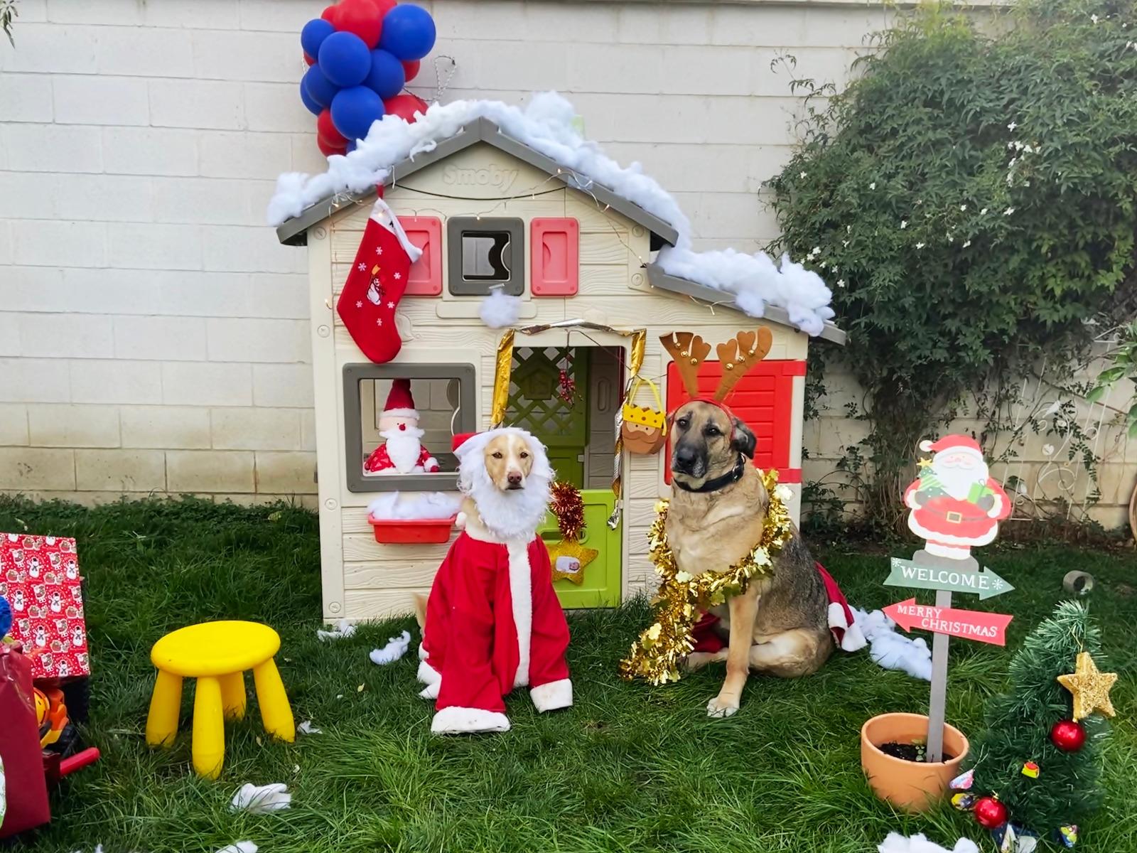 Una foto navideña de la perrita Pipa gana el I concurso de Christmas de Mascotas de Cúllar Vega